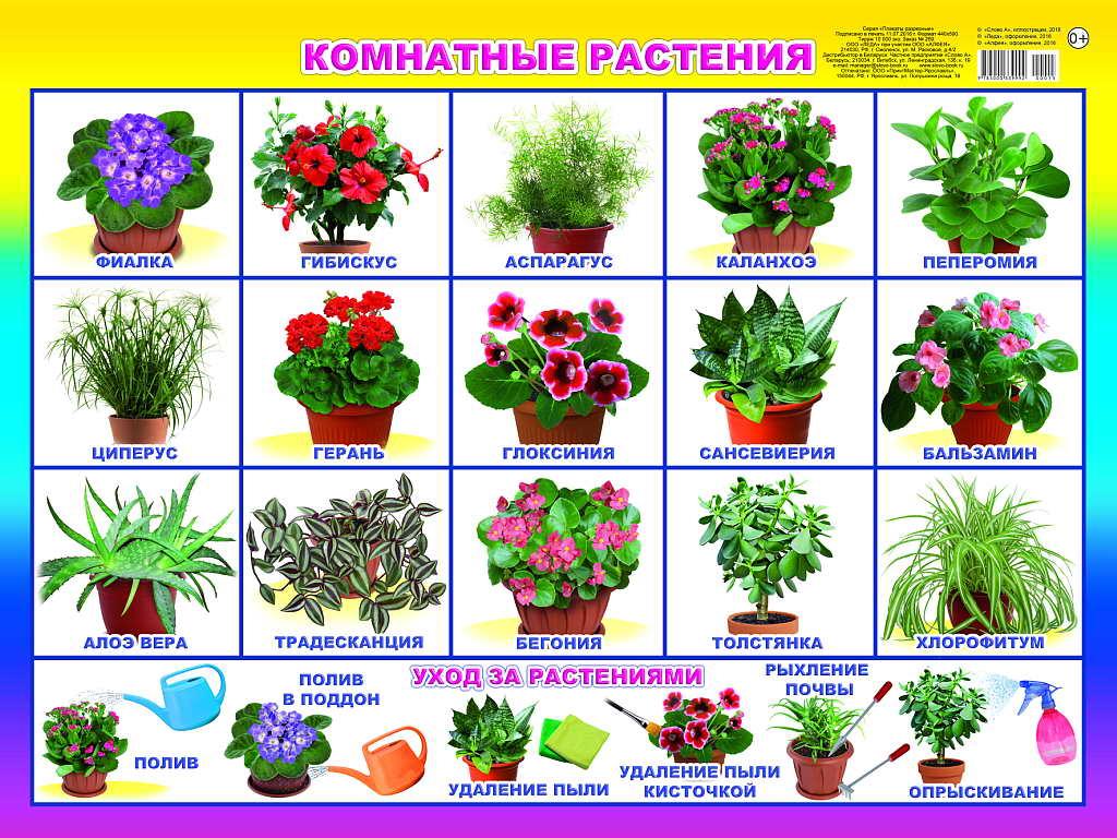 Комнатные цветы название в картинках